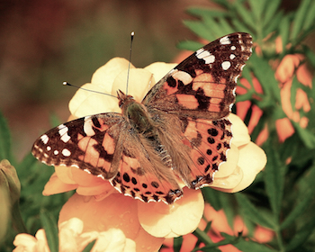butterfly sitting on flower, Why Is There a Hole in My Stomach, Past Life Spiritual Healing