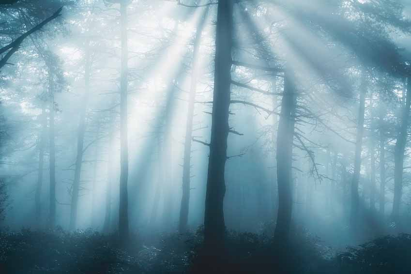 fog in the forest, Ainslie MacLeod